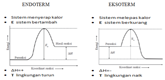 endoterm eksoterm