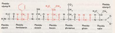 Memahami Struktur Protein