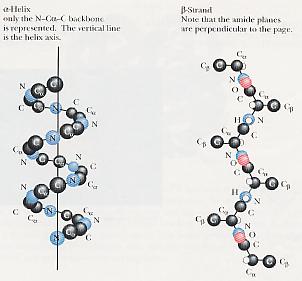 mmemahami struktur protein